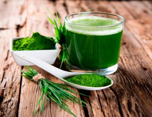 La perfecta combinación entre alga chlorella y espirulina